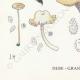 DETAILS 07 | Mycology - Mushroom - Cantharellus Pl.51