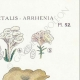DETAILS 04 | Mycology - Mushroom - Cantharellus - Nyctalis - Arrhenia Pl.52