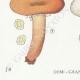 DÉTAILS 03 | Mycologie - Champignon - Lactarius - Aurantiacus Pl.54