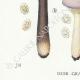 DÉTAILS 03 | Mycologie - Champignon - Lactarius - Helvus Pl.55