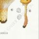 DÉTAILS 06 | Mycologie - Champignon - Lactarius - Quietus Pl.57