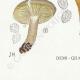 DÉTAILS 07 | Mycologie - Champignon - Lactarius - Quietus Pl.57