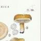 DÉTAILS 04 | Mycologie - Champignon - Lactarius - Theiogalus Pl.58