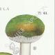 DÉTAILS 04   Mycologie - Champignon - Pussula - Cyanoxantha Pl.61