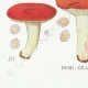 DÉTAILS 07   Mycologie - Champignon - Pussula - Cyanoxantha Pl.61