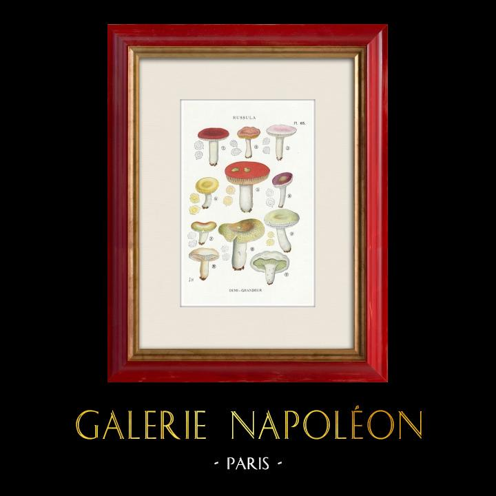 Gravures Anciennes & Dessins | Mycologie - Champignon - Russula - Atrorubens Pl.65 | Impression | 1919