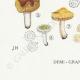 DÉTAILS 07 | Mycologie - Champignon - Russula - Nigricans Pl.66