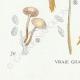 DÉTAILS 07 | Mycologie - Champignon - Marasmius - Scorodinus Pl.67