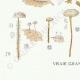 DETAILS 07 | Mycology - Mushroom - Marasmius - Scorteus Pl.68