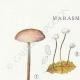 DETAILS 01   Mycology - Mushroom - Marasmius - Mulleus Pl.69