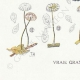 DETAILS 07   Mycology - Mushroom - Marasmius - Mulleus Pl.69