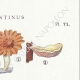 DETAILS 04 | Mycology - Mushroom - Panus - Lentinus Pl.71
