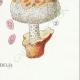 DÉTAILS 08 | Mycologie - Champignon - Lentinus - Trogia - Schyzophyllum - Volvaria Pl.73
