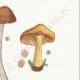 DETAILS 05 | Mycology - Mushroom - Pluteus Pl.75