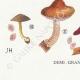 DETAILS 07 | Mycology - Mushroom - Pluteus Pl.75