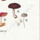 DETAILS 08 | Mycology - Mushroom - Pluteus Pl.75