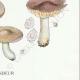 DÉTAILS 06 | Mycologie - Champignon - Entoloma - Jubatum Pl.76