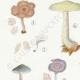 DÉTAILS 02 | Mycologie - Champignon - Clitopilus - Leptonia Pl.79