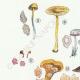 DETAILS 02 | Mycology - Mushroom - Leptonia - Nolanea Pl.80