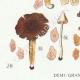 DETAILS 03 | Mycology - Mushroom - Leptonia - Nolanea Pl.80