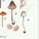 DETAILS 06 | Mycology - Mushroom - Leptonia - Nolanea Pl.80