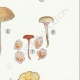 DETAILS 05   Mycology - Mushroom - Eccilia - Claudopus Pl.82
