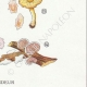 DETAILS 06   Mycology - Mushroom - Eccilia - Claudopus Pl.82