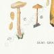 DETAILS 07 | Mycology - Mushroom - Pholiota - Caperata Pers Pl.83