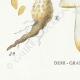 DETAILS 07 | Mycology - Mushroom - Pholiota - Mutabilis PL.84