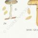 DÉTAILS 07 | Mycologie - Champignon - Pholiota Pl.87