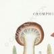 DETAILS 01   Mycology - Mushroom - Cromphidius Pl.88