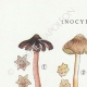 DETAILS 01   Mycology - Mushroom - Inocybe - Asterospora Q Pl.89
