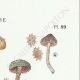 DETAILS 04   Mycology - Mushroom - Inocybe - Asterospora Q Pl.89