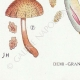 DETAILS 07   Mycology - Mushroom - Inocybe - Asterospora Q Pl.89