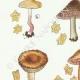DÉTAILS 02 | Mycologie - Champignon - Inocybe - Petiginosa Pl.90