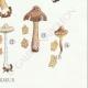 DÉTAILS 06 | Mycologie - Champignon - Inocybe - Petiginosa Pl.90