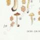 DÉTAILS 07 | Mycologie - Champignon - Inocybe - Petiginosa Pl.90
