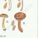 DETAILS 06 | Mycology - Mushroom - Inocybe - Trinii Weinm Pl.91