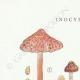 DETAILS 01 | Mycology - Mushroom - Inocybe - Jurana Pat Pl.92