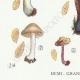 DETAILS 03 | Mycology - Mushroom - Inocybe - Jurana Pat Pl.92