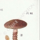 DETAILS 04 | Mycology - Mushroom - Inocybe - Jurana Pat Pl.92