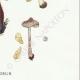 DETAILS 06 | Mycology - Mushroom - Inocybe - Jurana Pat Pl.92