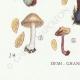 DETAILS 07 | Mycology - Mushroom - Inocybe - Jurana Pat Pl.92
