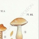 DETAILS 04 | Mycology - Mushroom - Hebeloma - Fastibile Pl.95