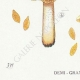 DETAILS 03 | Mycology - Mushroom - Hebeloma - Muscivum Pl.96