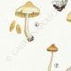 DÉTAILS 02 | Mycologie - Champignon - Hebeloma - Circinans Pl.97