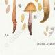 DÉTAILS 07 | Mycologie - Champignon - Naucoria - Semiorbicularis Pl.98