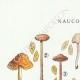 DÉTAILS 01   Mycologie - Champignon - Naucoria - Porriginosa Pl.100