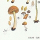 DÉTAILS 03   Mycologie - Champignon - Naucoria - Porriginosa Pl.100