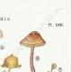 DÉTAILS 04   Mycologie - Champignon - Naucoria - Porriginosa Pl.100